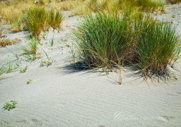 Beach vs plants