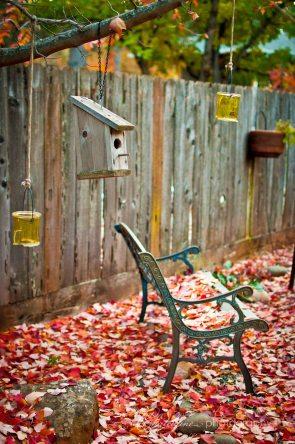 Autumn in the backyard
