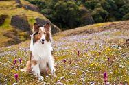 Missy amongst flowers