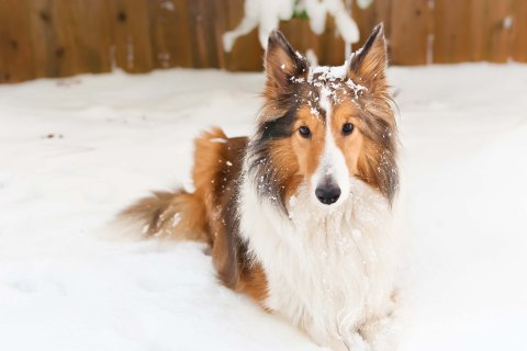 Missy in snow