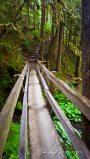 Bridge to Marymere Falls