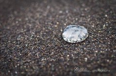 Miniature Jellyfish